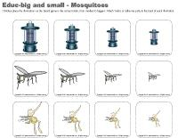 Educ big and small - Mosquitoes