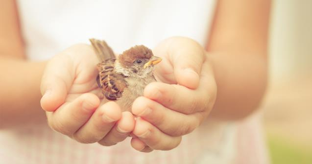 Birds - Babies and toddlers - Educatall