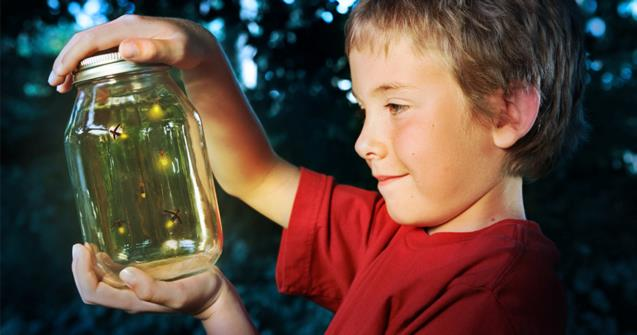 "Learn how to say ""fireflies"" in French"