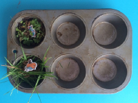 25 things you can do with muffin tins-6