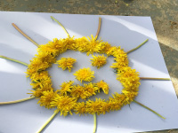 Arts & crafts with dandelions-1