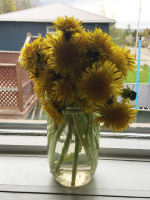 Arts & crafts with dandelions-4