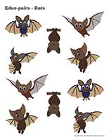 Educ-pairs-Bats