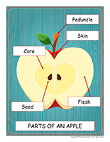 Educ-poster-Apples