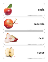 Giant word flashcards-Apples-1