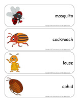 Giant word flashcards-Critters-2