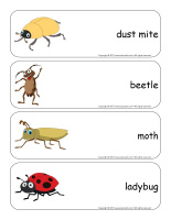 Giant word flashcards-Critters-3