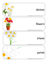 Giant word flashcards-Daisies-1