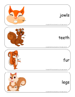 Giant word flashcards-Squirrels-2