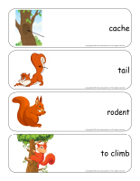 Giant word flashcards-Squirrels-3