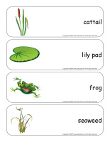 Giant word flashcards-Swamps-1