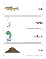 Giant word flashcards-Swamps-2