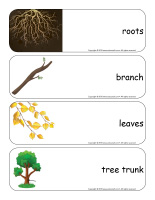 Giant word flashcards-Trees-1