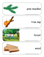 Giant word flashcards-Trees-3