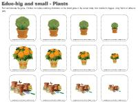 Educ-big-and-small-Plants
