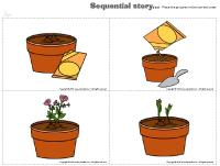 Sequential-story-Flowers