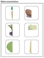 Educ-association - Vegetables