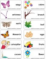 Word flashcards - Butterflies