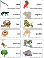 Word flashcards - The jungle