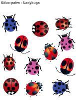 Educ-pairs-Ladybugs