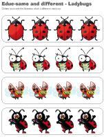 educ-same and different-Ladybugs