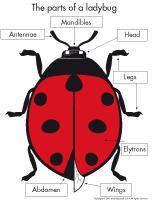 Poni presents-Ladybugs