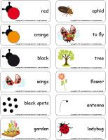 Word flashcards-Ladybugs