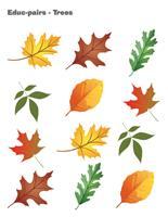 Educ-pairs-Trees