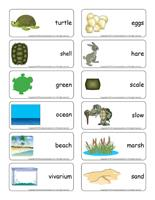 Word flashcards-Turtles