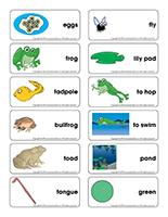 Word flashcards-Frogs