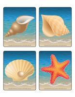 Picture game-Seashells