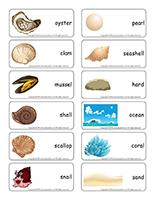 Word flashcards-Seashells