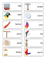Word flashcards-Parrots
