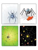 Picture game-Spiders