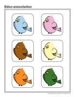 Educ-association-Birds
