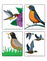 Picture game-Migratory birds