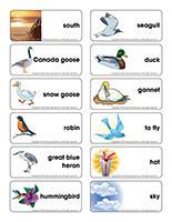 Word flashcards-Migratory birds