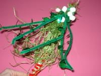 My mistletoe-7