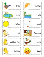 Word flashcards-Ducks