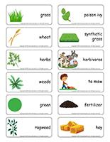 Word flashcards-Grass