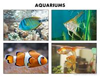 Poni discovers and presents-Aquariums