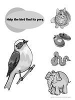 Birds - Activity sheet