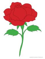 Models-Valentine's Day Roses