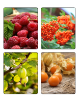 Picture game-Berries-2