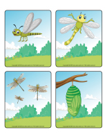 Picture game-Dragonflies-2