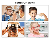 Poni discovers and presents-Sense of sight