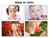 Poni discovers and presents-Sense of smell