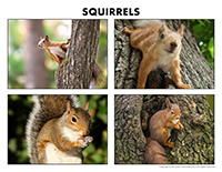Poni discovers and presents-Squirrels