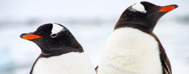 Cut and paste penguin