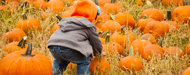 Learn how to say pumpkin and orange in French